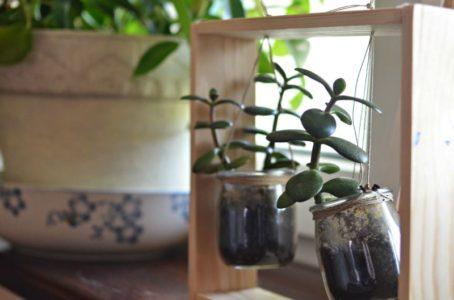 Drewniany stojak na sukulenty DIY