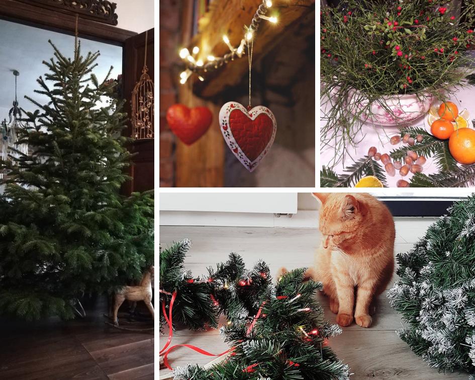 Domy z duszą – przegląd grupowy Bożego Narodzenia